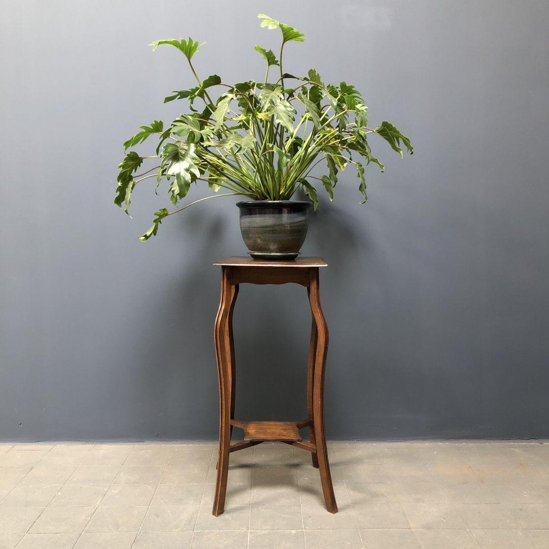 Sierlijke eiken plantentafel