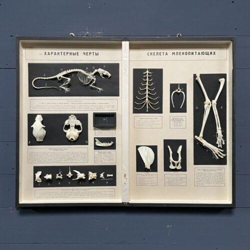 Geprepareerd ratten en katten skelet in boek