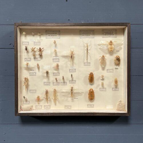 Grote vitrine met verschillende insecten