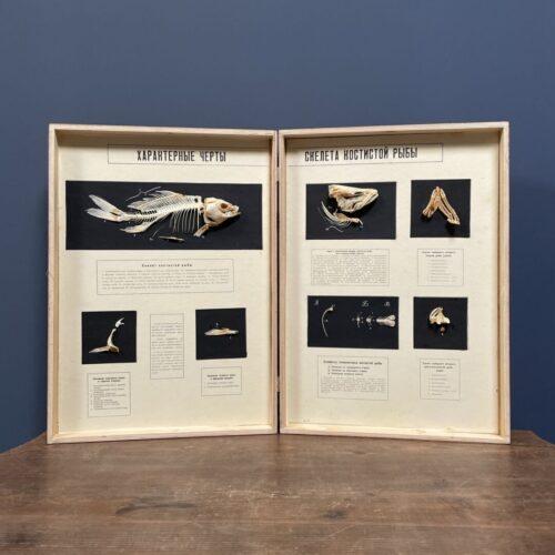 Geprepareerd vissen skelet in houten boek