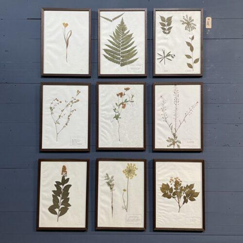 Ingelijste Herbariums van bloemen en planten