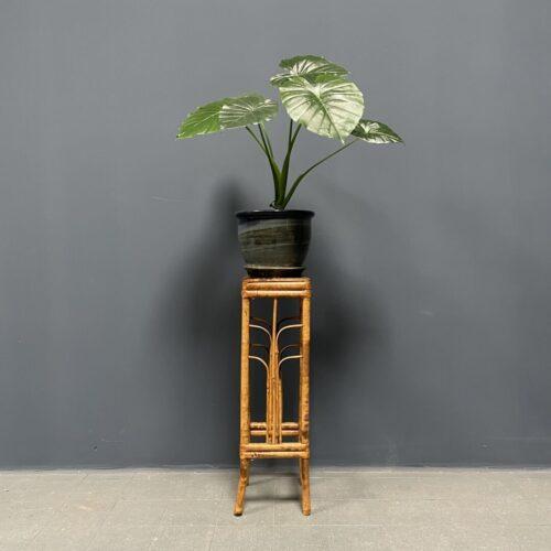 Kleine bamboe plantentafel