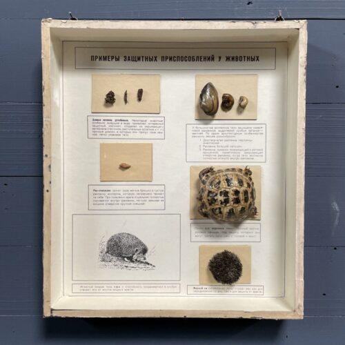 Oude vitrine met schildpad en schaal en schelpdieren