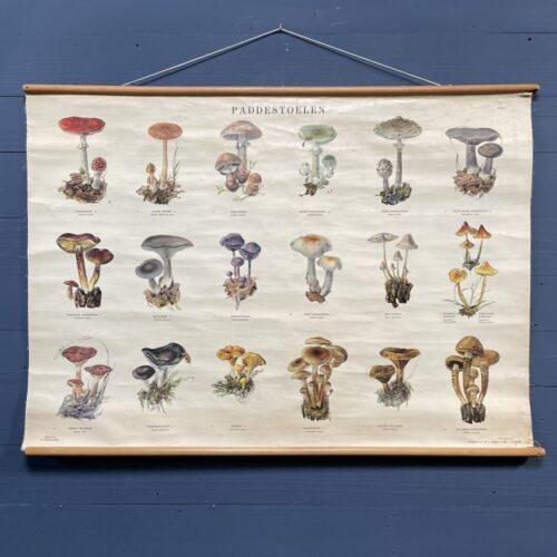 Oude schoolkaart met paddenstoelen I