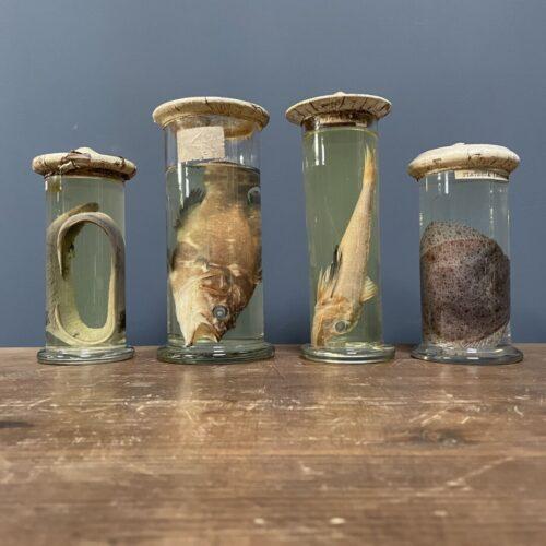 Verzameling van vier vissen op sterk water