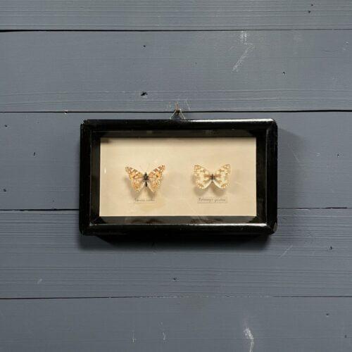 Twee vlinders in oud zwart lijstje
